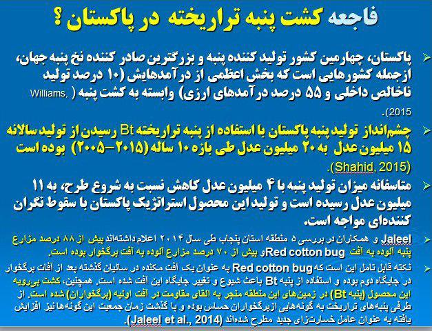 می خواهند 1 میلیون هکتار پنبه تراریخته در ایران کشت دهند