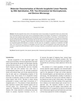 Molecular Characterization of Borrelia burgdorferi Linear Plasmids by DNA Hybridization, PCR, Two-Dimensional Gel Electrophoresis, and Electron Microscopy